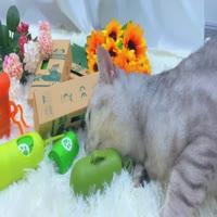Pet bag scene display